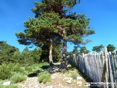 Siete Picos_La Sierra del Dragón; rutas por cabañeros ruinas de numancia con niños por madrid